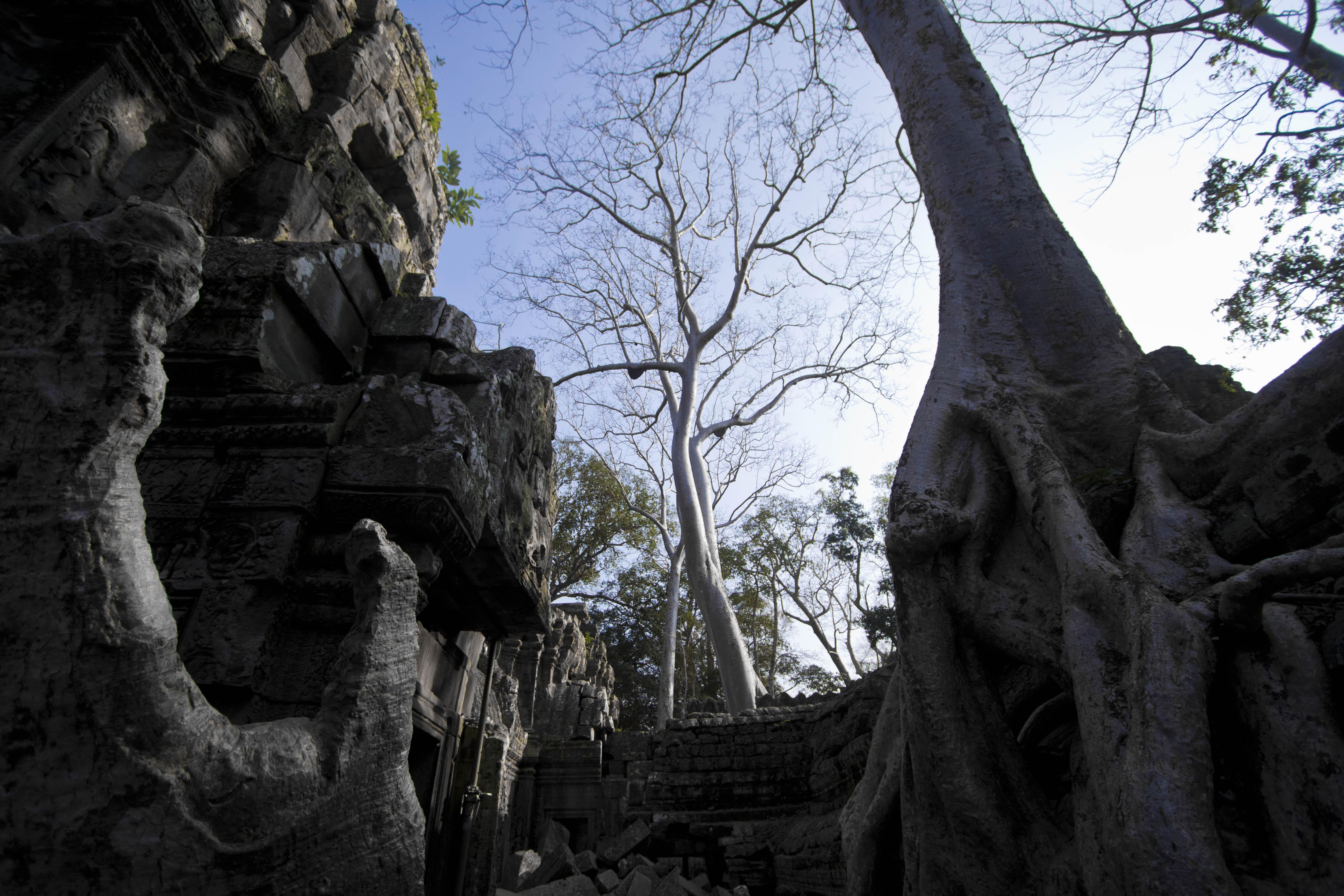 Ta Prom temple, Cambodge - Crédit photo : Samir Taouaou
