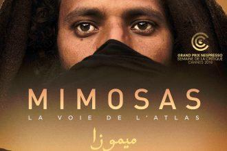 mimosa-film-onorient