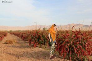 Iran Insight: un oeil photographique sur le Khorasan
